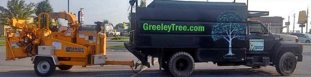 Local Tree Service safe