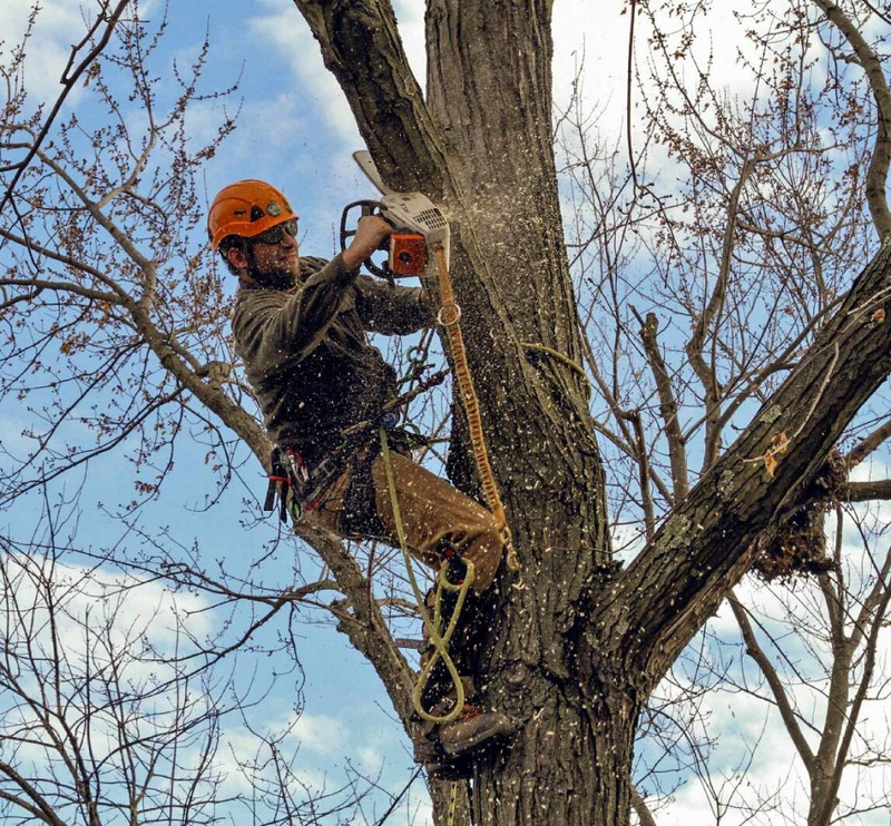 #1 Emergency Tree Service Berkeley Springs WV