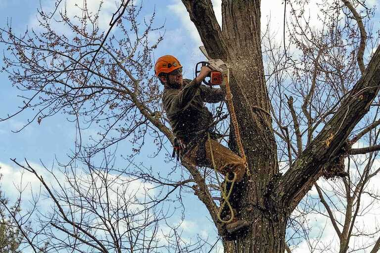 #1 Tree Service Mathias WV