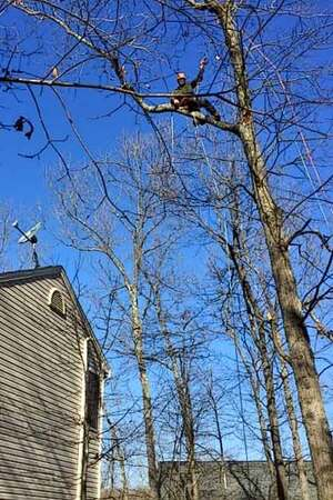 Safe Emergency Tree Service Libertytown MD