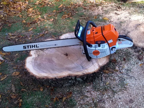Safe Stump Removal Loudoun County Va, Clarke County Va, and Frederick County Va